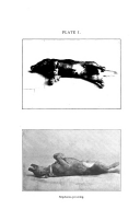 Página 470